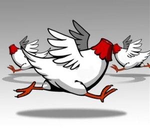 https://racingbitch.files.wordpress.com/2011/09/headless-chickens.jpg?w=300