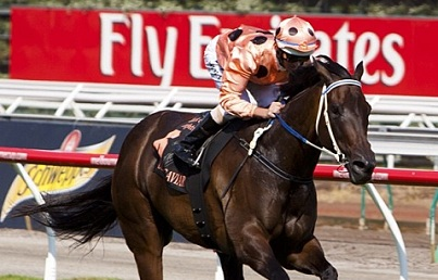 THE MIRACLE THAT IS BLACK CAVIAR 1