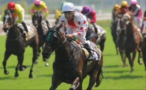 TIPS AND DIM SUM FOR THURSDAY AT HAPPY VALLEY  2