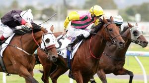 Adelaide Cup