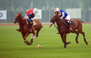 WHY HORSE RACING CAN'T KEEP STANDING STILL 18