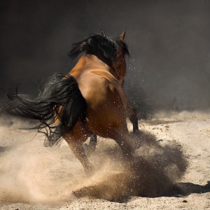 THE BEAUTY OF HORSE POWER 3