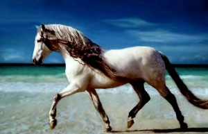 THE BEAUTY OF HORSE POWER‏ 3