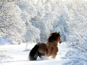 THE BEAUTY OF HORSE POWER‏ 4