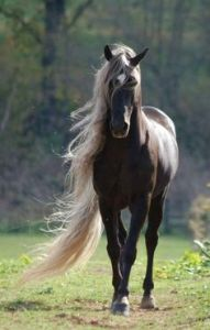 THE BEAUTY OF HORSE POWER 1