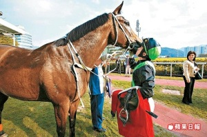 HONG KONG HERO AND ROCK STAR HORSE 10