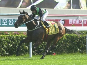 HONG KONG HERO AND ROCK STAR HORSE 2