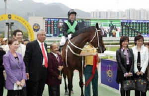 HONG KONG HERO AND ROCK STAR HORSE 3