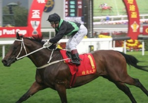 HONG KONG HERO AND ROCK STAR HORSE 6