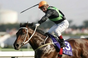 HONG KONG HERO AND ROCK STAR HORSE 7