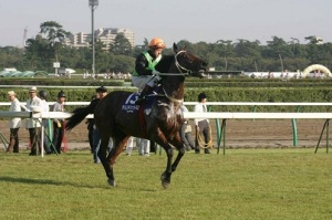 HONG KONG HERO AND ROCK STAR HORSE 8