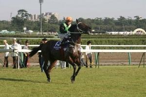 HONG KONG HERO AND ROCK STAR HORSE 8