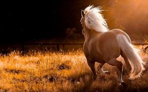 beauty of horse power 1