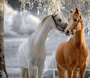 beauty of horse power 4