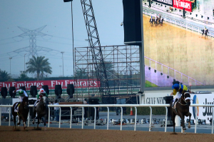 From The Dubai World Cup Twitterverse 8b