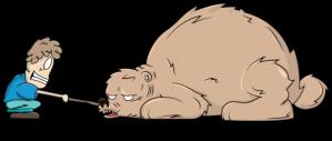 THE BEAR 1b